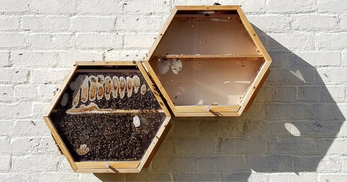 At-Home Beekeeping: Host a hive in your home - Virtuul News