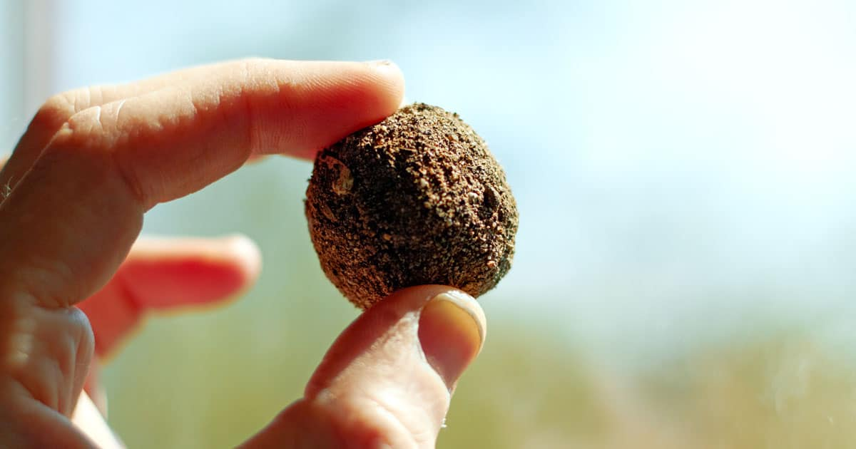 Let it Grow: Seedballs Pave the Way Towards Reforestation