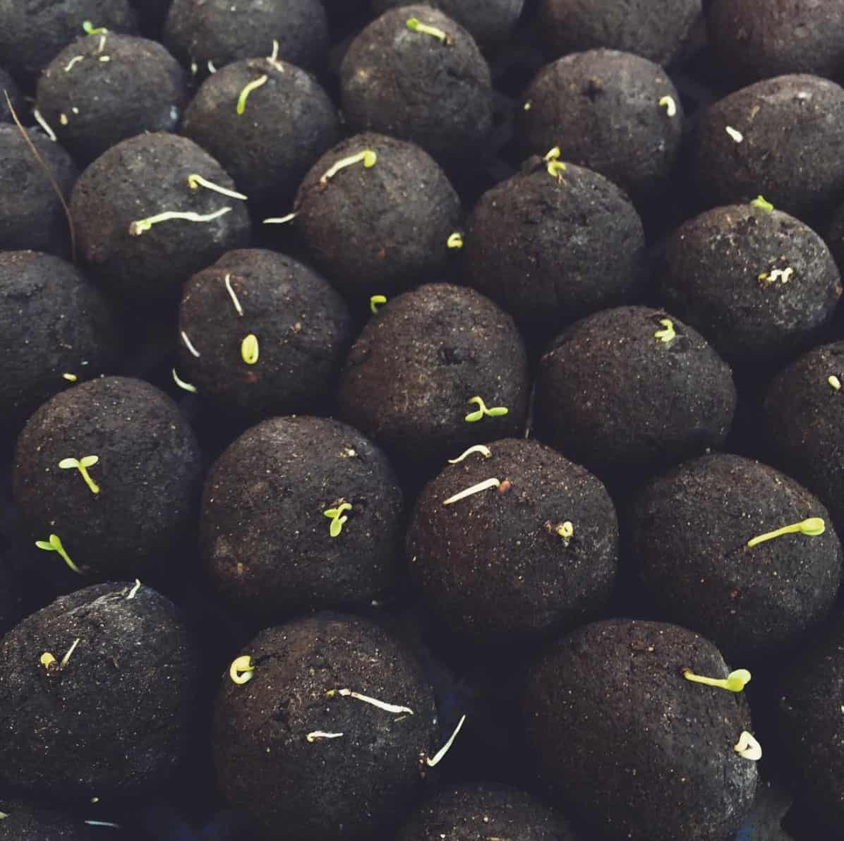 Seedball, seed balls, seedballs paving the way to reforestation - Virtuul News