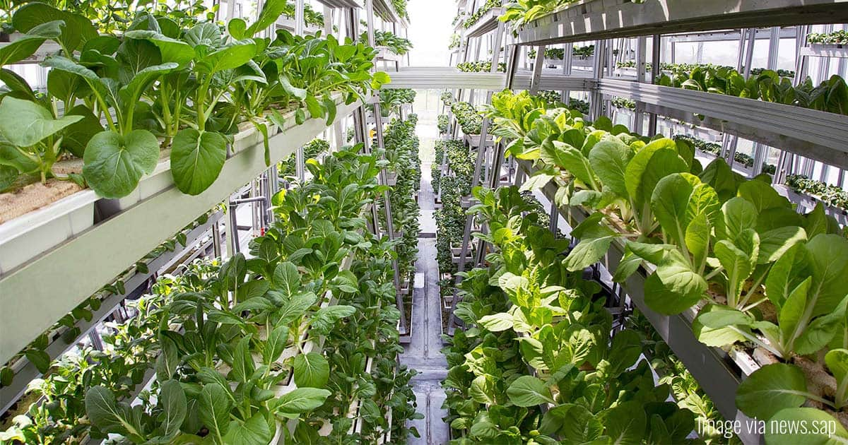 Aeroponic Farming: A New Way to Grow Crops