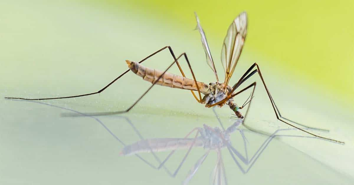 Mosquito Birth Control Possibly Replacing Insecticides | Virtuul News