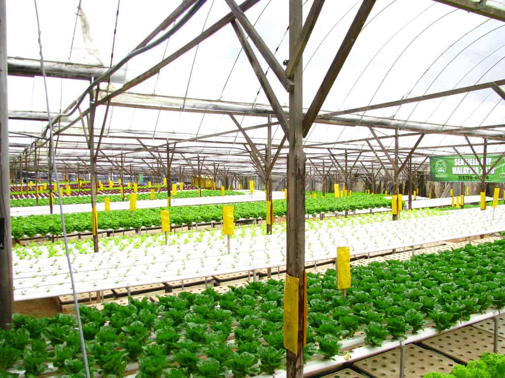 Aeroponic Farming: A New Way to Grow Crops | Virtuul News