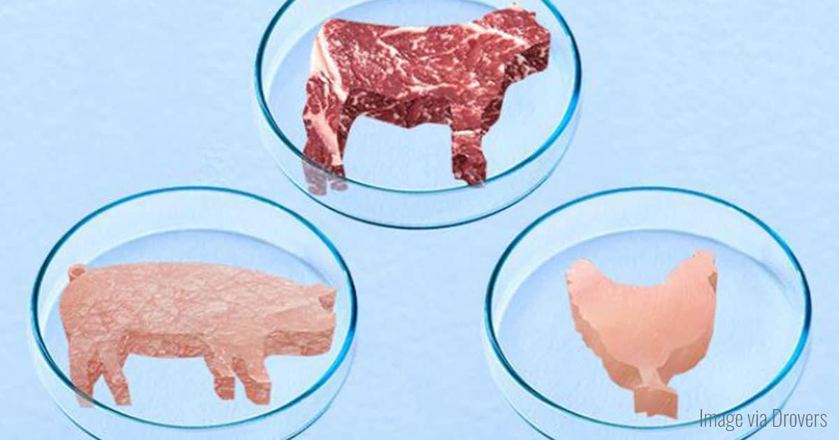 Lab-Grown Meat and the Future of Cellular Agriculture