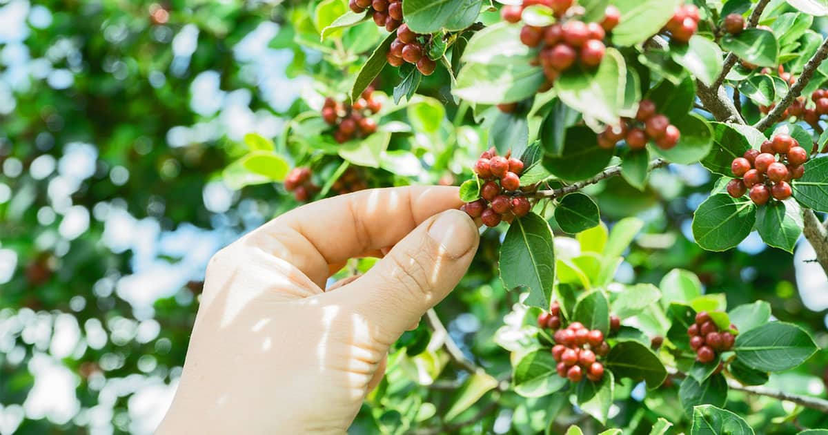 The Truth Behind Decaf Coffee: Is It Safe?   Virtuul News