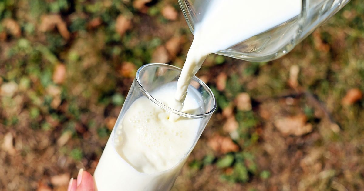 Cockroach Milk and 4 Other Dairy Alternatives for Eco-Friendly and Healthy Living